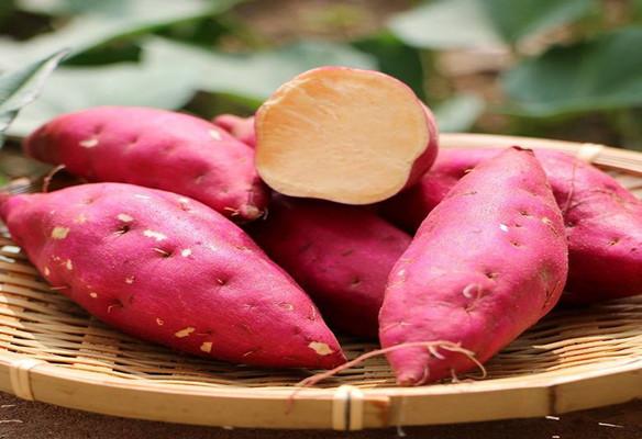 秋冬时节,红薯味美,食养有道身体好!