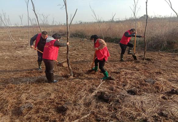高庄社区:建设绿色家园 开展植树活动